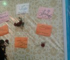برگزاری نمایشگاه «پریدخت» به مناسبت هفته عفاف و حجاب توسط انجمن های نیشابور